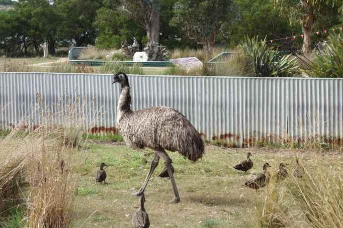 DSC03730 emu