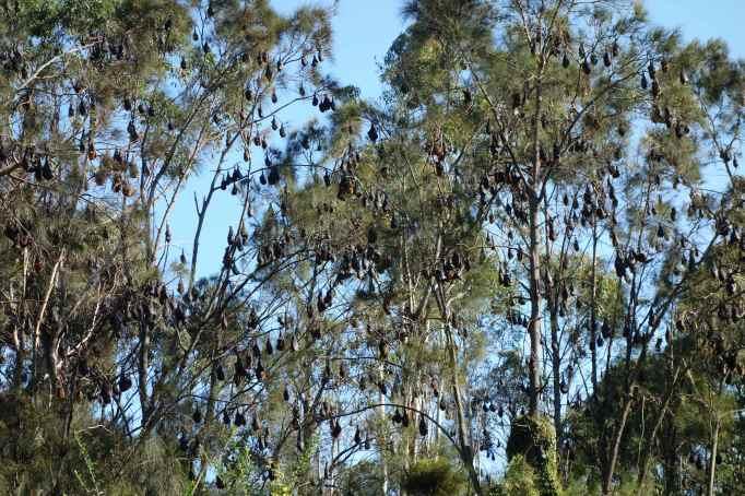 DSC04223 TreeBags