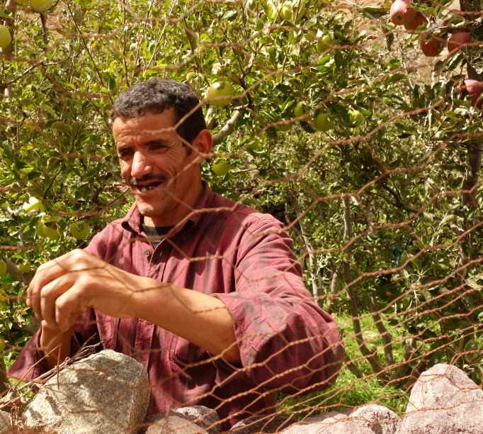DSC00154 Berber apple farmer