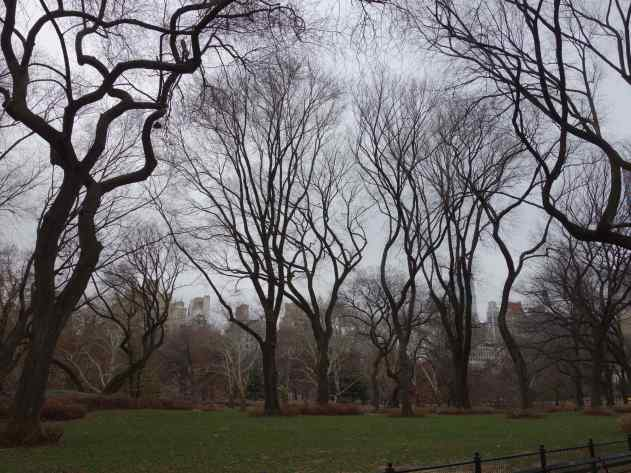 I love the way the bare tree limbs fill the space so gracefully.