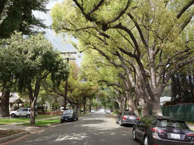We drove into Pasadena on these beautiful tree lined streets. I like trees, don't you?