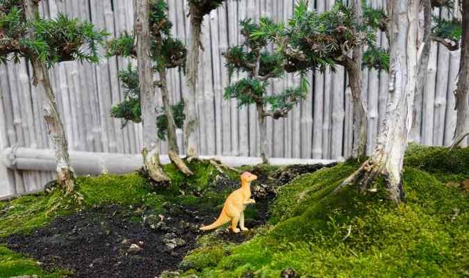 Huntington Garden w Clare Gorfininckel