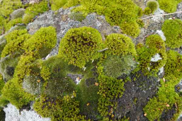 Don't you love the way this moss and it's rich green color envelop the rock without smothering it?
