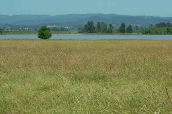 If you ever get to Portland, you want to visit Sauvie Island.