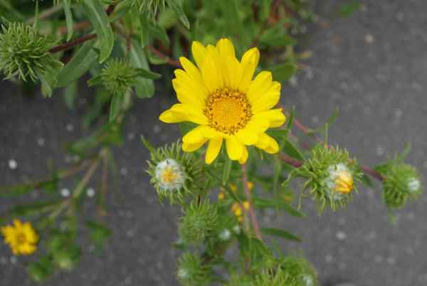 I wish our friend Joyce had been with us to tell us what this flower's name is; Joyce knows all the plants and flowers.
