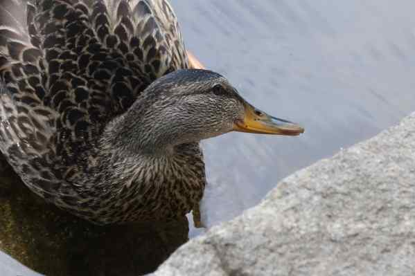 Ms Mallard said she travels too, mostly by air, and that Canadians are very friendly. She likes it here.