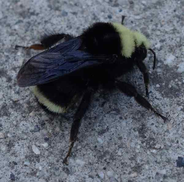 """""""Sorry Solbit, I'm busy gathering pollen and making honey. I just can't spare a minute to look for … what did you say? … jumper tables? Oh, no, jumper cables,"""" Belinda Bee spoke so fast that her words just buzzed in one ear and out the other."""
