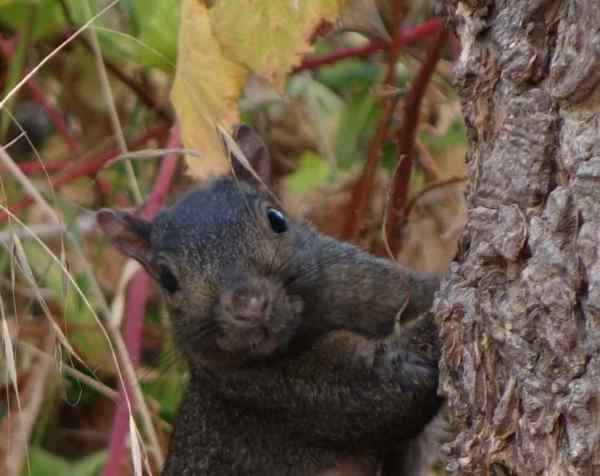 """""""Sorry kiddo, I don't have any jumper cables,"""" Sherri the Squirrel told me, """"but let me know if you feel like a nut. I've got plenty of those."""""""