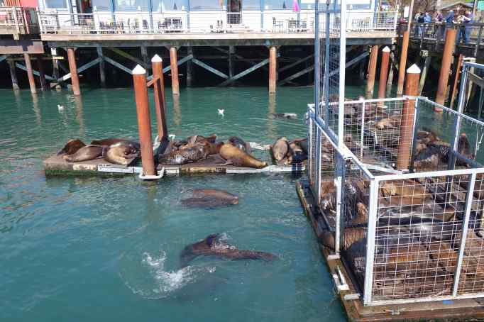 Sea Lions enjoying a lazy afternoon on the dock.
