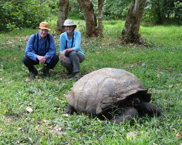 So, this would be a Galapagos tortoise, right? It's also called a Giant Tortoise. You don't have to be genius to know why.
