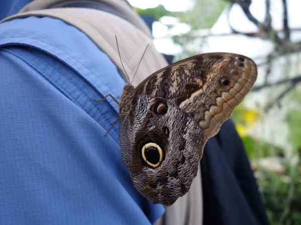 On first glance, you might think that's an animal with a big eye, but look again. It's a pattern on a butterfly's wing!