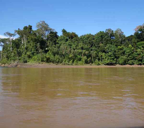 Our canoe went through a little rough water, and that was a sign that we had gone from the Madre de Dios River to the Manu River. Another way to tell the difference is that the Manu River looks much more brown, that is, muddy.