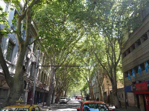 Imagine getting to walk down this street everyday.  That's what we do here at home in Mendoza!