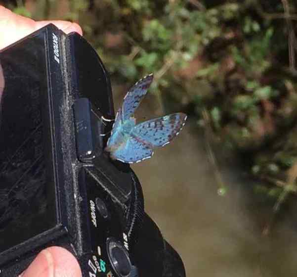 OK, Nona's right, some things at Iguazu Falls are both pretty and safe, like this butterfly on her camera.