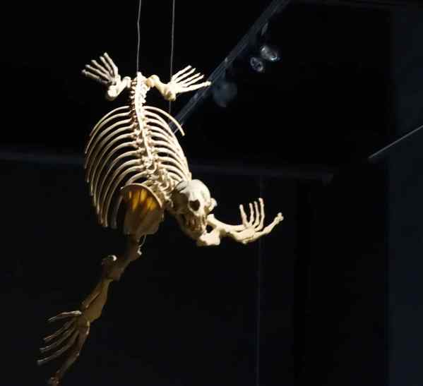 This skeleton belonged to a big sea creature that lived before any human beings existed.