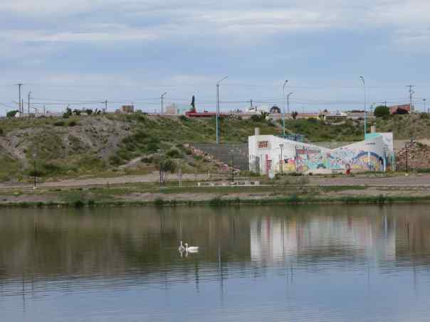 The swans are so graceful and beautiful that I think the people of Trelew are really lucky to have them here.